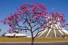 Tree in a Bloom & Cathedral of Brasilia - Brazil ➤ http://www.nationalcapitals.net/wp-content/uploads/2012/03/cathedral-of-brasilia-brasilia-brasil.jpg - Fotopedia Heritage