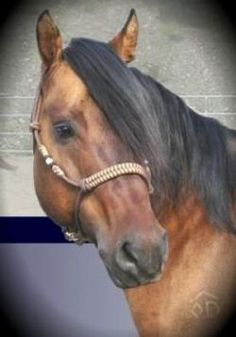 Fancy Rope Halter with Silver Ferrules