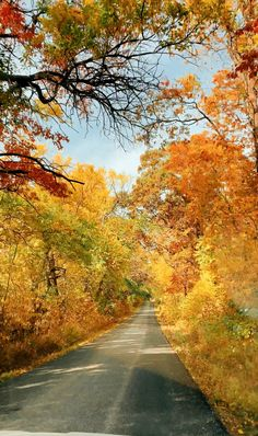 Alone Photography, Scenery Photography, Aesthetic Photography Nature, Nature Aesthetic, Autumn Photography, Photo Scenery, Photo Background Images, Photo Backgrounds, Fall Senior Pictures