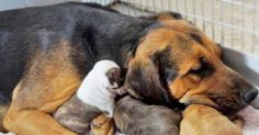 Rescue Mama Acts As Surrogate To Five Pit Bull Puppies via LittleThings.com