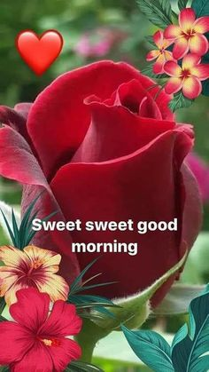 Happy sunday - posted by : @ 171716799 posted on : sharechat शुभ रविवार sweet sweet Good Morning Roses, Good Morning Picture, Good Morning Good Night, Morning Pictures, Happy Sunday Images, Good Morning Happy Thursday, Good Morning Beautiful Images, Beautiful Gif, Happy Weekend