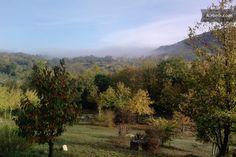 eco nature _tend forest  maremma in Roccastrada