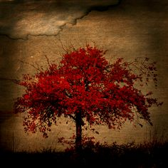 """red passion  """"Killers reinvent and believe and this leans on me, like a rootless… tree"""""""