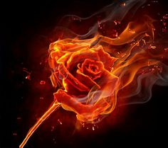 Rose embers