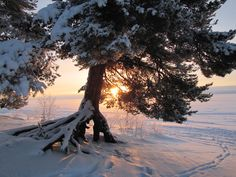Winter day in Sotkamo, Finland. Snow Photography, I Want To Travel, Winter Day, Wabi Sabi, Beautiful Images, Finland, Winter Wonderland, Travelling, To Go