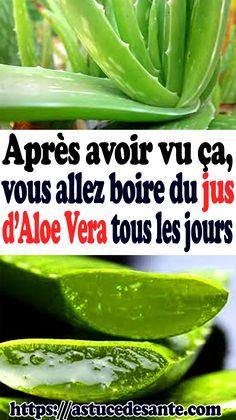 Les feuilles fraîches de l'aloe vera, dont la consommation est actuellement à la mode, peuvent vous faire plus de mal que de bien, prévient le ...#aloevera #aloeveragel #skincare #aloe #maskerwajah #beauty #aloeveragelmurah #naturerepublicaloevera #natural #skincareroutine #aloeveraskincare #naturerepublic #naturerepublicindonesia #aloeveragelasli #aloeveraoriginal #skin Aloe Vera Gel, Gel Aloe, Celery, Cucumber, Biscuit, Vegetables, Tax Day Deals, Natural Remedies, Juice