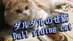ダルダルのせ猫【猫 かわいい 動画 おもしろい】