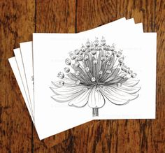 Set of 4 cards Astrantia Flower by GreenhouseDesignCo on Etsy