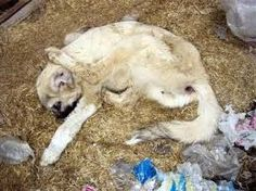 Betrayal by those they trust the most Animal cannot consent Rape is Rape #OpBeast