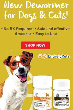 parasitology test 1 copy flashcards quizlet dipylidium caninum rh pinterest com