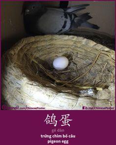 鸽蛋 - Gē dàn - trứng chim bồ câu- pigeon egg