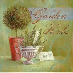 Garden Herbs – Angela Staehling