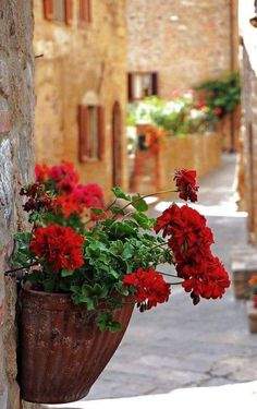 White roses and red geraniums. Geraniums in wall pot Color Splash, Beautiful World, Beautiful Places, La Trattoria, Red Geraniums, Container Gardening, Flower Power, Beautiful Flowers, Red Flowers