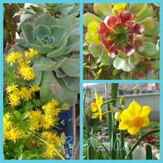Sabah evden çıkarken çektim! Güne güzel başlamama katkı veriyorlar! 👍😉💙 #bahçemizden #çiçek