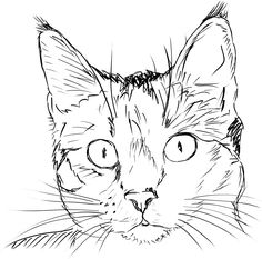 Cat Face Sketch Drawing - Cat Clip Art Black And White Cat Face Clip Art Vector Clip Art Cat Face Sketch Images Stock Photos Vectors Shutterstock Cat Face Sketch Images Stock P. Cat Face Drawing, Line Drawing, Drawing Sketches, Face Drawings, Easy Cat Drawing, Sketching, Cat Coloring Page, Coloring Pages, Cat Outline