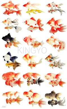 Watercolor Fish, Watercolor Paintings, Goldfish Tattoo, Goldfish Pond, Golden Fish, Cool Fish, Fish Sculpture, Fish Drawings, Beautiful Fish