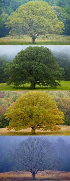 The four seasons only the tree will tell.