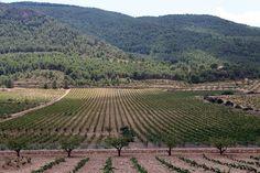 La Renta Agraria andaluza subirá un 6,2% este año, con un valor de producción de 8.700 millones
