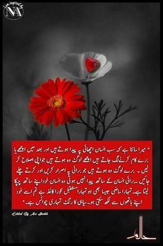Urdu Quotes, Best Quotes, Qoutes, Novels To Read, Best Novels, Urdu Thoughts, Good Thoughts, Heart Touching Lines, Quotes From Novels