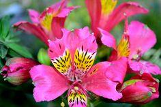 Flower // Colores que la naturaleza demuestra