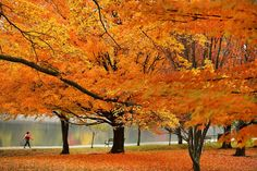 Photographers around the world capture colorful scenes of fall. Foliage transforms our landscapes into a sea of vibrant hues, as the seasonal light sets it aglow.