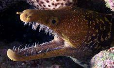Moray Eel | 15 Terrifying Creatures From The Ocean