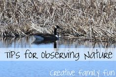 Tips for observing wildlife with small children.