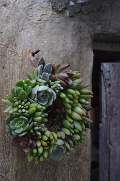 Linda!  Here's another idea for the hen's and chicks dad always wants to give you!