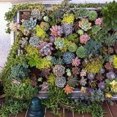 I am in succulent love! Check a cool dozen DIY posts & ideas all making the hot little succulent into living art!  (photo via Luna-See)