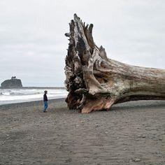 Manches Treibholz taugt einfach für gar nix. Bei dem Bild frage ich mich nur was für einen Sturm es brauch um so einen kleinen Redwood Baum an den Strand zu spülen