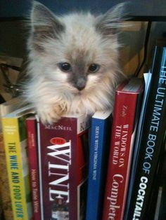 """""""I needs a book for story time. But I think i'm in da wrong section...I donts drinks wine, only milk."""""""
