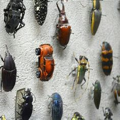 Bug collection of Natural history museum in Cleveland. ❓Do you like it? . . Don't hesitate to visit tarantulabox.com. We have a Winter Sale ❄ on many items including beetle frames! Up to 30% OFF selected items only till February, 28 ⏳ . . Pictures found via web.