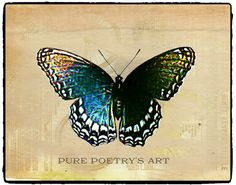 Red Spotted Purple Butterfly - Enhanced Art Photography - Digital Image Download - 2 Versions