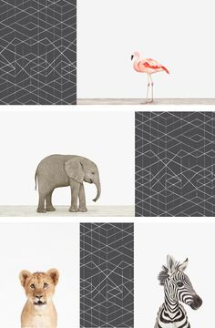 Sophisticated Art for Baby's Room. Shop our charming collection of Baby Animals at The Animal Print Shop by Sharon Montrose. Come see Baby Monkeys, Baby Porcupines, and more!