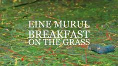 'Eine murul / Breakfast on the Grass', an animation by Mihkel Reha
