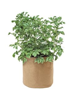 Potato Grow Bags - Growing Potatoes in Containers | Gardener's Supply
