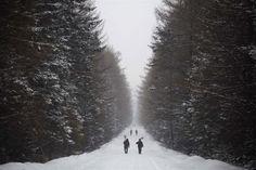 David Guttenfelder / AP:  2012 April snow in North Korea