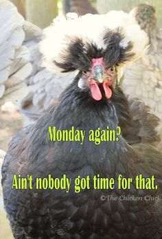 Monday again? Ain't nobody got time for that.  ~The Chicken Chick Give me CoFFee Monday Humor, Monday Quotes, Monday Pics, Funny Qoutes, Funny Memes, Hilarious, Jokes, Chicken Chick, Chicken Humor