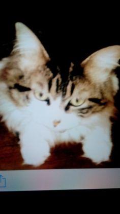 Mi gatito Toddy
