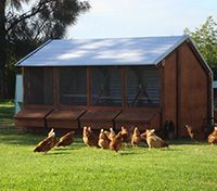 Large 4 Bay hen house from Outpost Buildings in New Zealand. Great relocatable design!