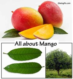 Mango – nutrition, proven health benefits and uses