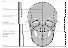 Cofe +: Пропорции головы