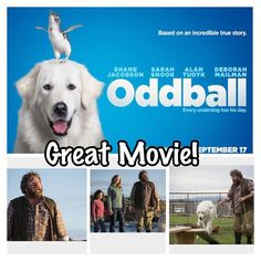 #365Gratefuls Day 634: I'm #grateful I got to see the excellent #Aussie #Movie #Oddball today with my daughter. Once again #ShaneJacobson comes through with the goods playing an authentic Aussie bloke with a big heart & a great sense of humour- from what I've seen its very close to who he is in real life. The story is based in #Warrnambool & on a true story. The scenes of the #12Apostles & the rugged #GreatOceanRoad coastline make the movie even better - and are a great advertisement for the…