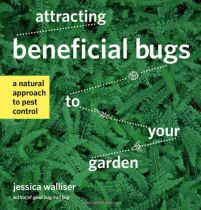 ~How To Kill Squash Bugs, Squash Bug Eggs, and Nymphs~ | http://www.reformationacres.com/2012/07/how-to-kill-squash-bugs-squash-bug-eggs-and-nymphs.html