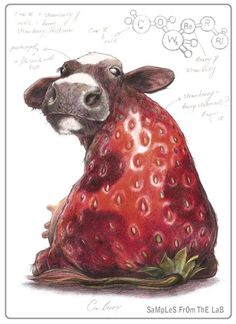 Rob Foote - good combination of my love of strawberries & my Holstein collection.