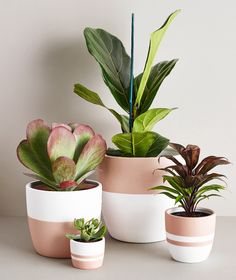 Medium Rosewood Pot - Ansel & Ivy modern blush pink and white planters for indoor plants Here is a few important things that may help you correctly increase your brand-new plants. Indoor Plant Pots, Indoor Planters, Diy Planters, Ceramic Planters, Potted Plants, Pots For Plants, Concrete Planters, Tall Planters, Modern Planters