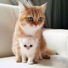 Mama gata y su gatito