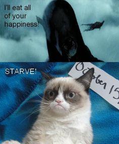 HP and Grumpy Cat, love it!