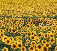 milioni di milioni..... by Annamaria Rizzi, via Flickr