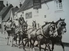 4 horse team from Oxfordshire